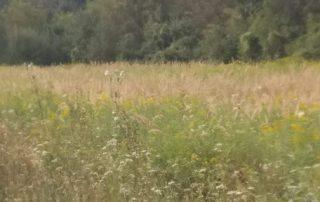 Biodiversiteit van het buitenleven in Hongarije in Kovácsszénája waar twee vakantiewoningen te huur zijn.